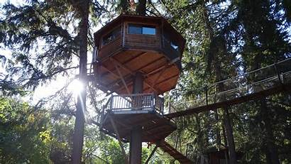 Houses Tree Engineering Treehouse Designs Living Types