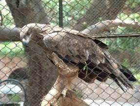 Lahore Zoo Animals
