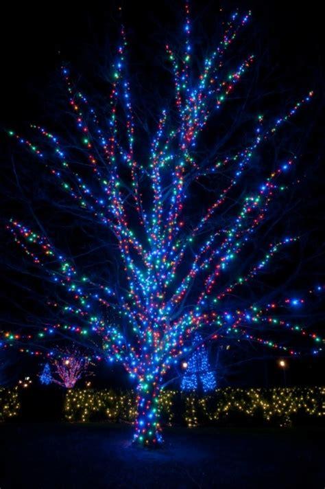 tree wrap lights how to wrap lights around trees hometalk