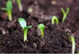 Conventional Farming vs Organic Farming Organic Farming Actually  Organic Farming Vs Conventional Farming