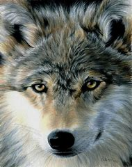 Colored Pencil Drawings of Wolves