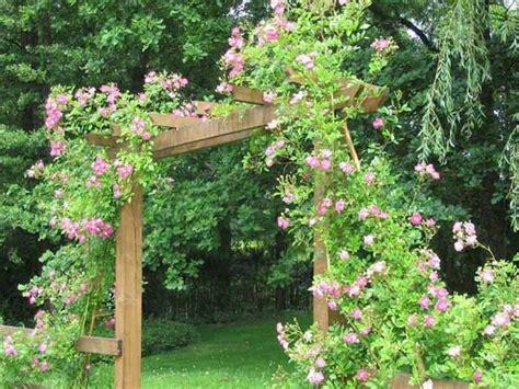 de tuinen barb die besten 17 ideen zu rankhilfen f 252 r rosen auf pinterest
