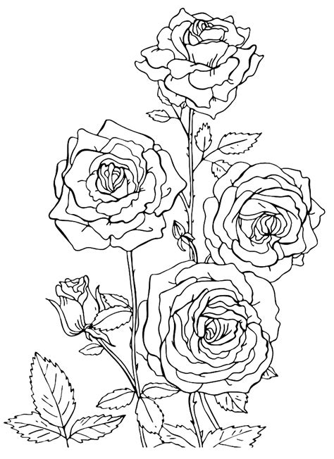 roses coloring pages    print