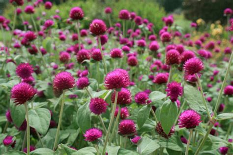 Garten Im Herbst Anlegen by Den Garten Im Herbst Farbenfroh Mit Blumen Und Pflanzen