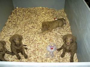 Longmeadow facilities for Cedar shavings for dog kennels