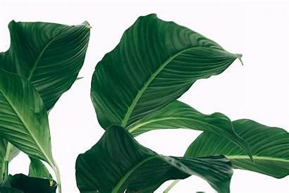 Plants Air Purifying Clean Standard Keep