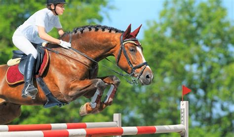 breeds horse jumping bred soaring specifically horses