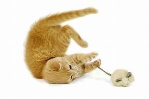 Jouets Pour Chats D Appartement : quel jouet pour mon chat le chat d 39 int rieur vie ~ Melissatoandfro.com Idées de Décoration