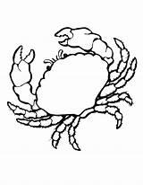 Coloring Crab Shells Sea Animals Colouring Shell Printable Crabs Animal Seashell Cliparts Marine Clip Clipart Realistic Crawfish Coloringbay Drawing Library sketch template