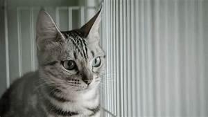 Mit Katze Umziehen : katze adoptieren so klappt es mit viel liebe und feliway ~ Michelbontemps.com Haus und Dekorationen