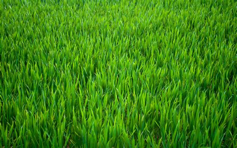 Take Time To Water Your Own Grass It Would Be Just As