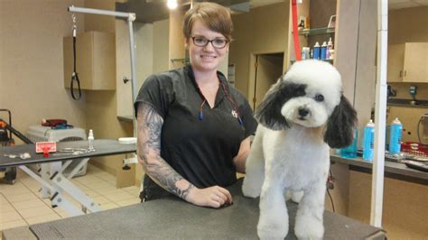 spotted dog pet grooming coupons near me in puyallup