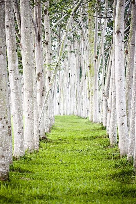 trees pathway landscape 1001 gardens