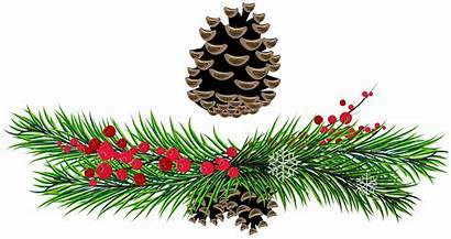 Christmas Clipart Clip Pine Cone Tree Transparent