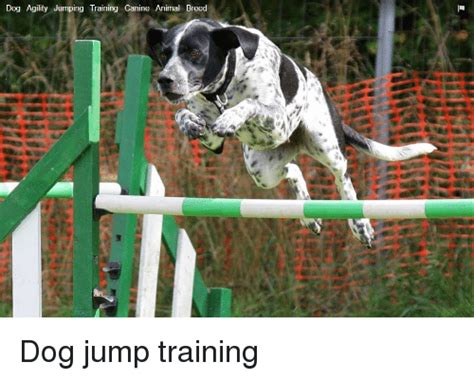 memes  jump training jump training memes