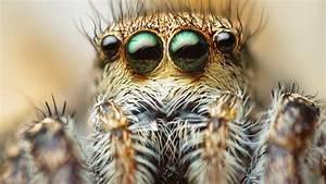 Faire Fuir Les Araignées : les araign es pourraient faire dispara tre l 39 tre humain de la terre en peine un an ~ Melissatoandfro.com Idées de Décoration