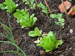 Plantes Amies Et Ennemies Au Potager : les bons conseils pour d marrer un potager ~ Melissatoandfro.com Idées de Décoration