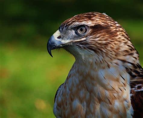 Birds Of Prey ~~ Photography