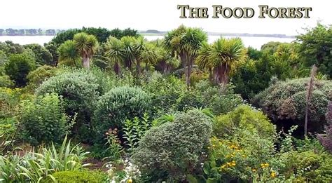 temperate climate permaculture food forest organictalkscom