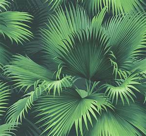 Endless Summer Dark Green Palm Wallpaper - Tropical