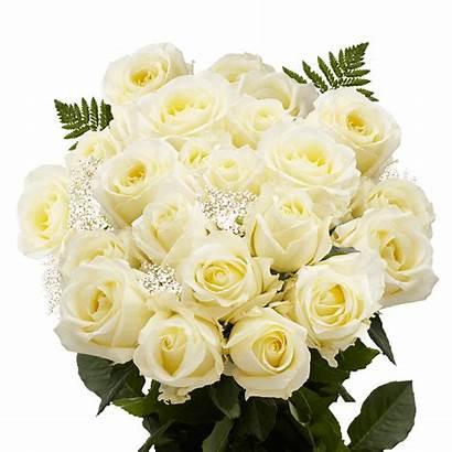 Roses Ivory Dozen Flowers Bouquets Flower Filler