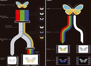 Infografia Del Manual T U00e9cnico De Cine Y Televisi U00f3n Digital