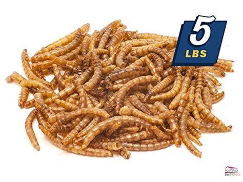 dried mealworms bulk treats chickens wild birds reptiles 5