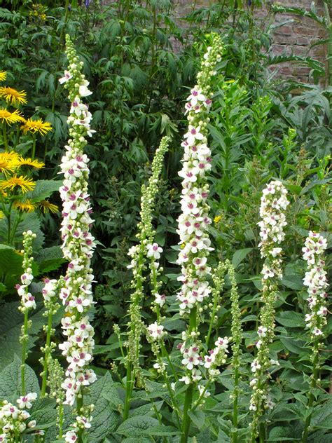 Recipe For A Traditional English Cottage Garden Susan