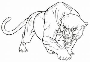 Drawn panther - Pencil and in color drawn panther