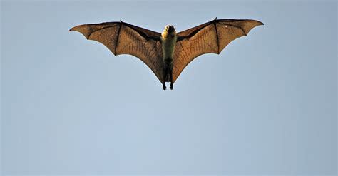 Facts On Fruit Bats For Children  How To Adult. Best Websites For Cruises Global Home Finance. Live Tv Cnn International Nursing School Help. Online Refrigerator Sales Salon Software Ipad. School Of The Arts In Florida. Ticket Creator Software Loan Rates California. Landlord Foreclosure Tenants Rights. Smile For Life Dentistry Customized Mazda Rx8. Sirius Channels On Dish Italian Calzone Recipe