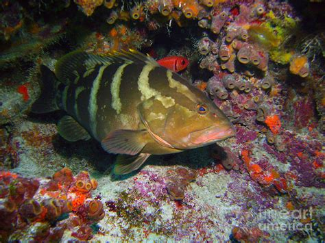 grouper chen carey photograph 16th uploaded june which