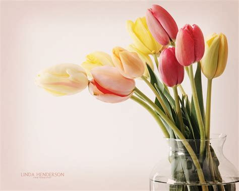 Beautiful Flower Wallpapers For You