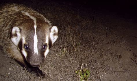 writer searches badgers mount tam
