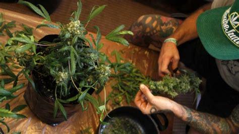 culture cannabis interieur materiel 28 images la