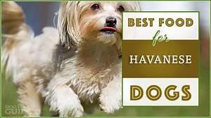 9 Best Healthiest Dog Food For Havanese In 2019