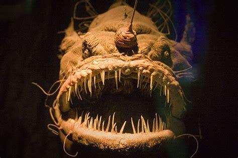 top ten scariest deep sea creatures tiefseeangler trifft