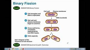 Microshorts Binary Fission