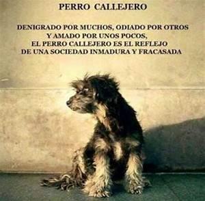 """""""el perro callejero es el reflejo de una sociedad inmadura y fracasada"""" #perrocallejero #"""