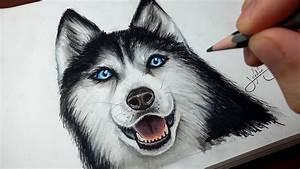 Bébé Loup Blanc : comment dessiner un chien husky tutoriel youtube ~ Farleysfitness.com Idées de Décoration