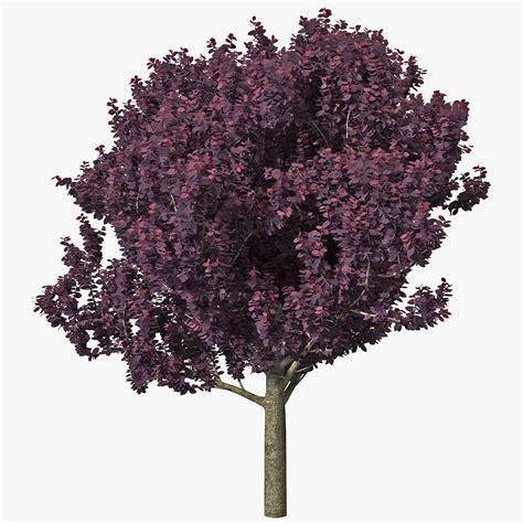 tree with purple leaves purple leaf plum tree 3d model by 3d molier 3d molier 3d models