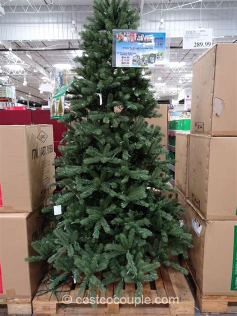 xmas trees at costco holidays