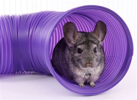 Chinchilla Toys, Wood Chews & Other Fun Stuff   Exotic