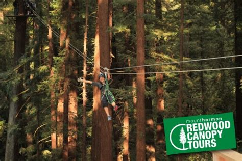 redwood canopy tours mount hermon redwood canopy tour