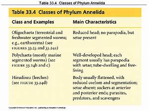 Table 33.4 Classes of Phylum Annelida