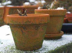 Rosen Winterfest Machen : rosen berwintern 6 tipps tipps f r deinen garten ~ Frokenaadalensverden.com Haus und Dekorationen