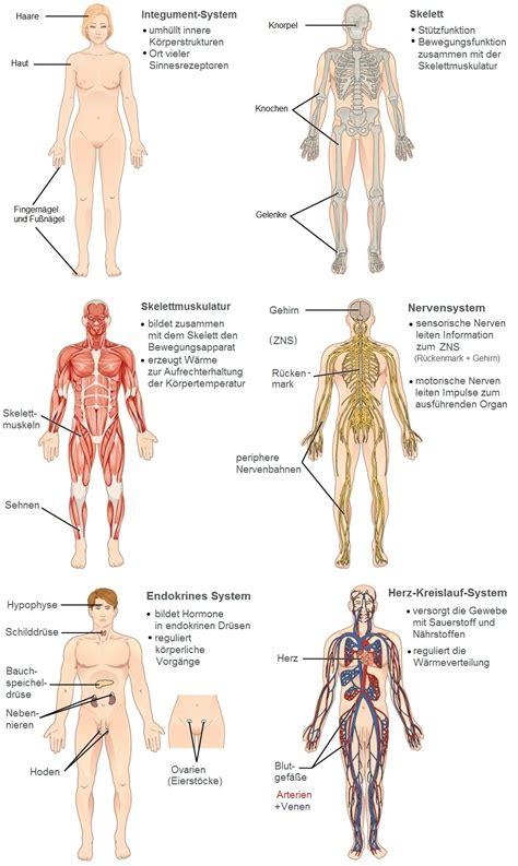 organsystem wikipedia
