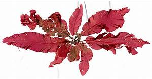Red Algae Extract Fights Ebola.. and HIV, SARS and HCV ...