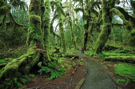 forest in usa 10 fairy tale places you won t believe actually exist