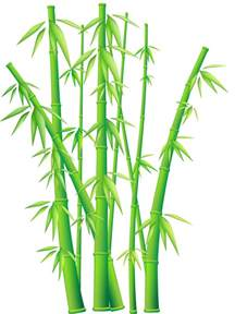 Bamboo Vector Art