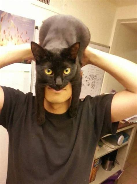 batman cat catman shows how to look like batman using your cat